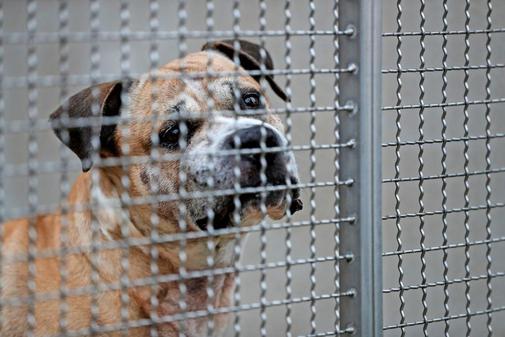 Hund Chico hinter Gittern im Zwinger